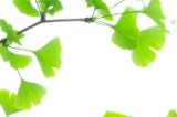 herbal tinnitus remedy